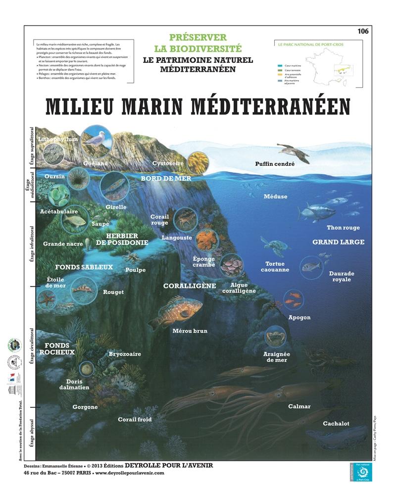 DEYROLLE-MILIEU MARIN MEDITERRANEEN